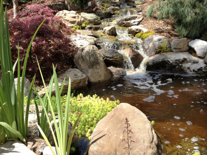 backyard pond & waterfall