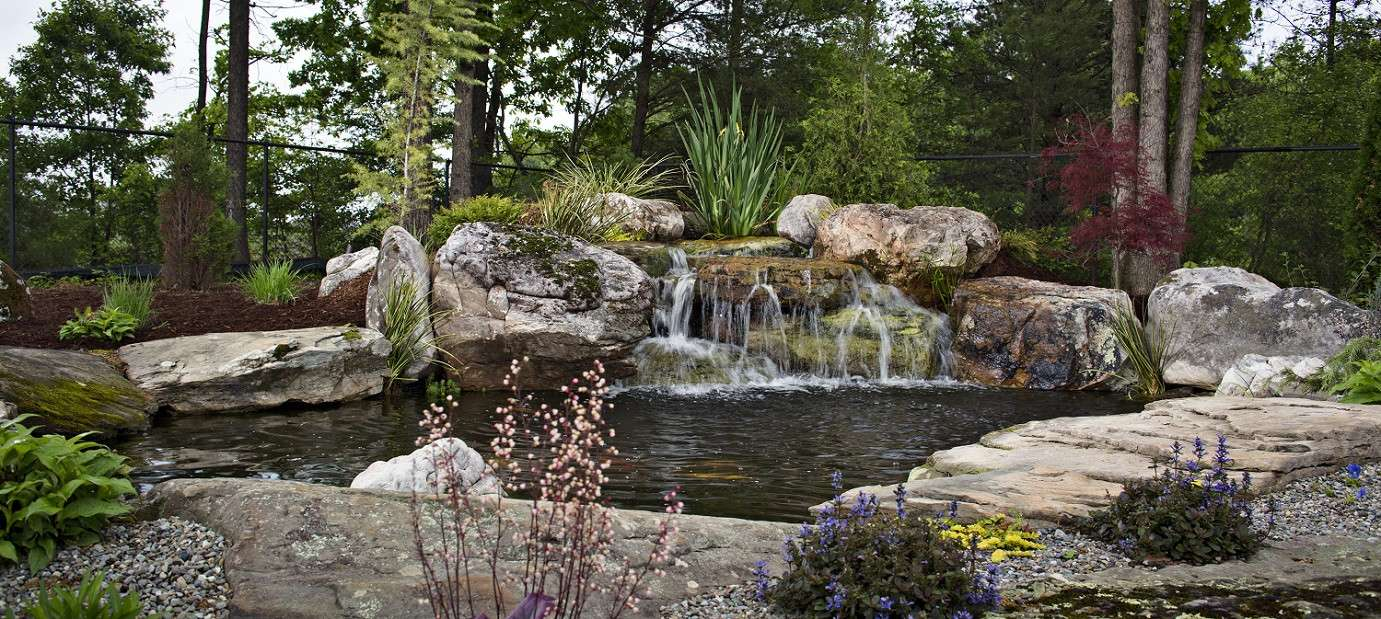 Transform Your Landscape